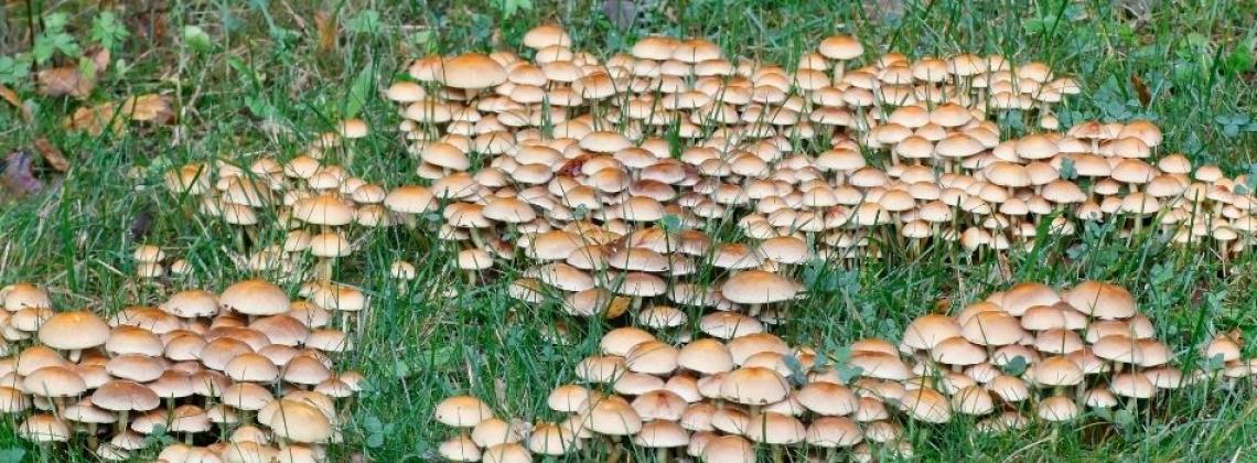 Micología; producción y sostenibilidad de la mano